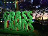 outsidelands-grasslands.JPG